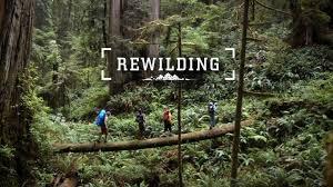 """El movimiento """"Rewilding"""": """"no se trata de conservar lo que queda, sino de recuperar lo perdido allá donde se perdió """""""